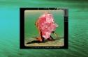 Clean Bandit & Mabel - Tick Tock (Feat. 24k Goldn)